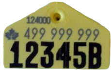 trapezoid tag for website